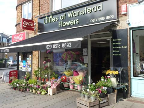 Lillies of Wanstead